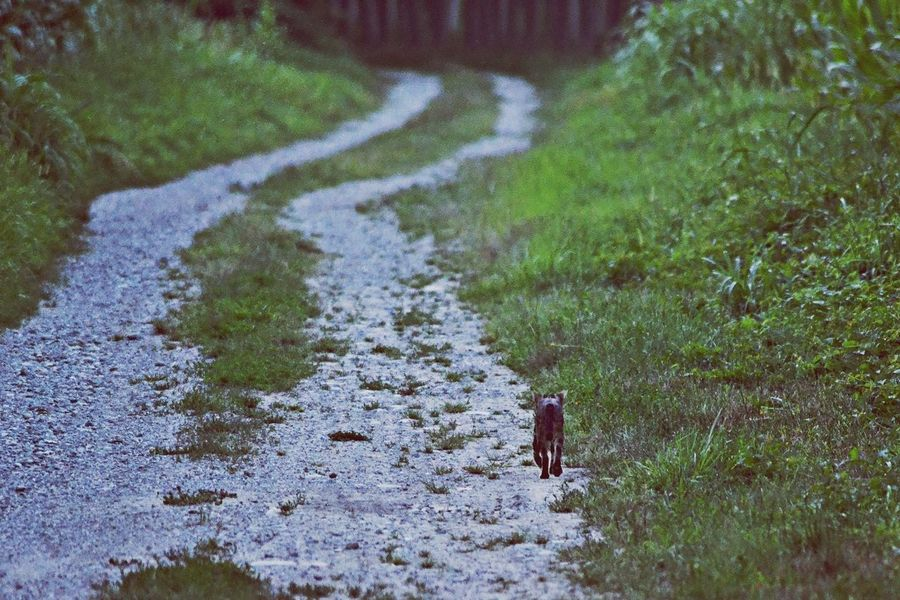 a Lonely Cat walking in the Evening