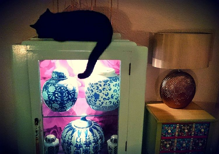 Jemima Cats Cats Of EyeEm Black Cat Queen Cat Sleepy Cat Chill Time Relaxing Moments Pets Animals Cat Asleep