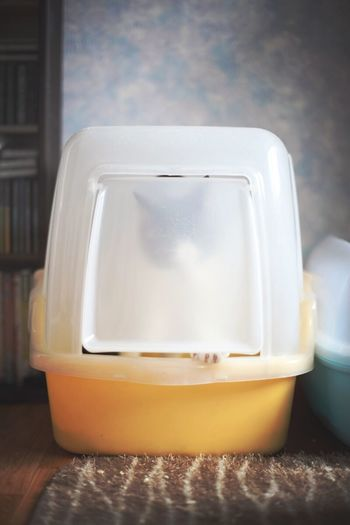 일 보시고 정리중 Cat Yomi Cat's Toilet