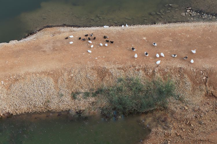 High angle view of birds perching on land