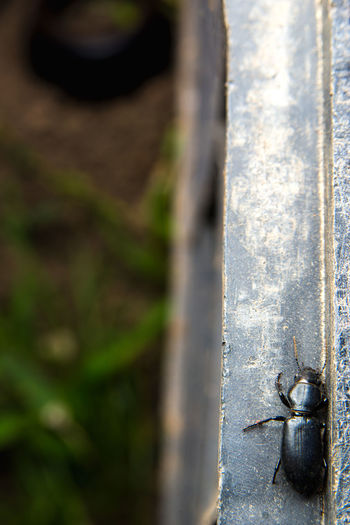Close-up of lizard on metal