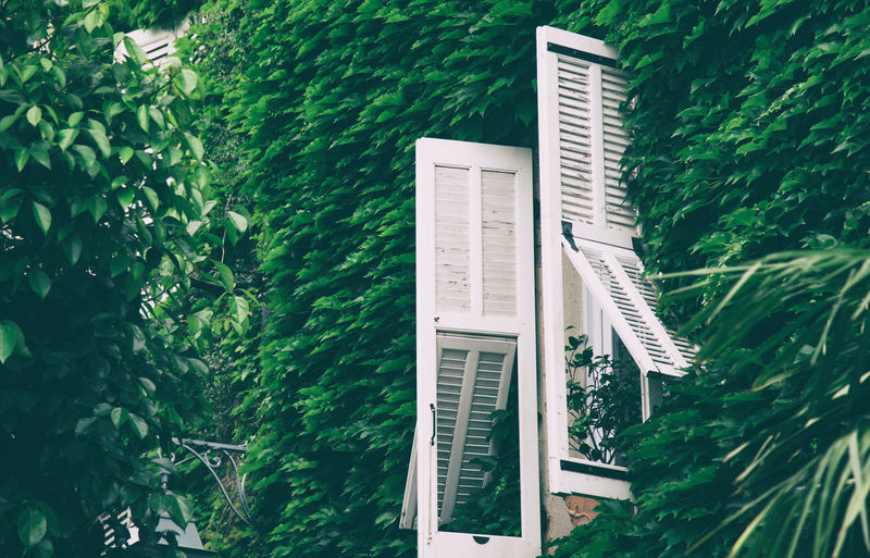 Creative Space Architecture Beauty In Nature Building Exterior Built Structure Communication Day Green Color Growth High Angle View Ladder Land Leaf Nature No People Outdoors Plant Sea Tree Water
