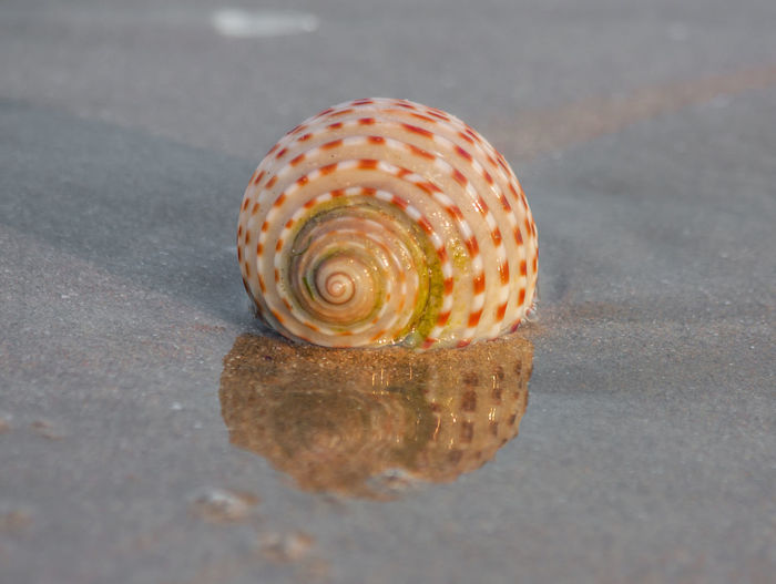 Close-up of shell on road