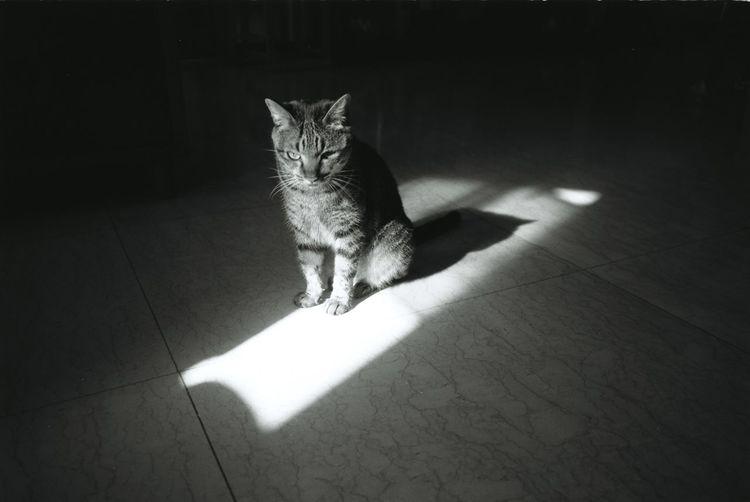Sprite the Cat