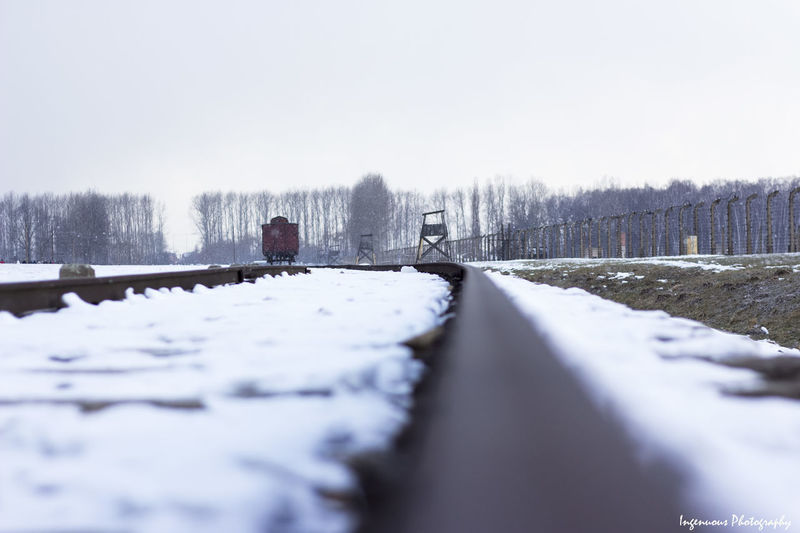 History makes you feel Sad Cold Temperature Winter Snow Tree Nature Transportation Sky Day Covering Plant Scenics - Nature Direction Non-urban Scene Frozen Focus On Background The Way Forward No People Land Beauty In Nature Track Outdoors Surface Level