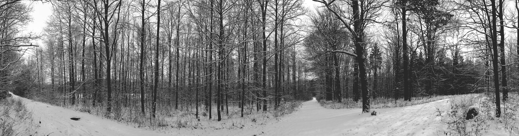 Winter Nature Photography Smartphonephotography Nature_collection Wintertime Zielony Las Forest Panoramic Panoramic Photography Nature