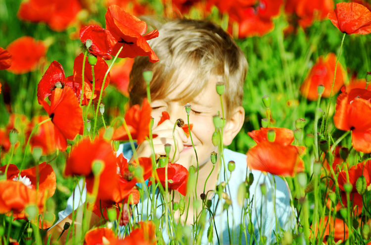 Beauty In Nature Boy Childhood Close-up Day Estonia Flower Head Green Color Red Color Smelling Smelling The Flowers