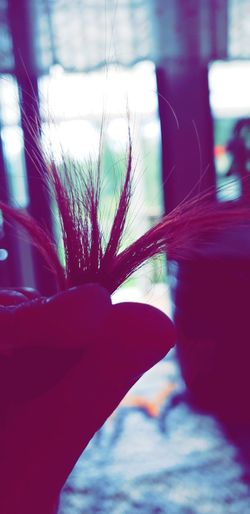 Human Hand Flower Red Close-up Plant Stamen Petal Pollen Flower Head Hibiscus Single Flower Cosmos Flower Growing Blooming Dandelion Single Rose Osteospermum Dandelion Seed Sunflower Stem Rosé Pink Dew Plant Life Passion Flower Orchid Blossom Fragility In Bloom Dahlia