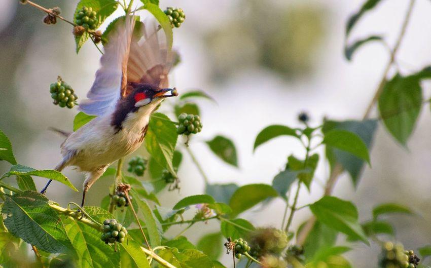 Moment Bird
