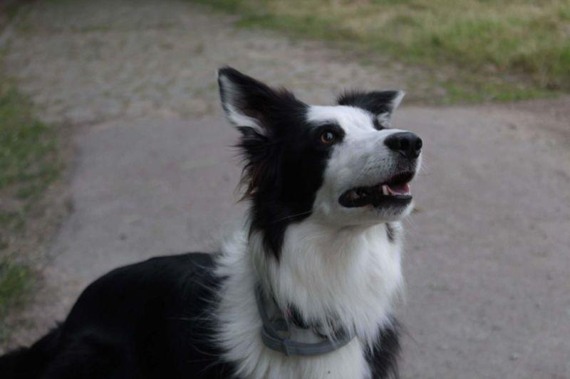 Pets Dog Beauty