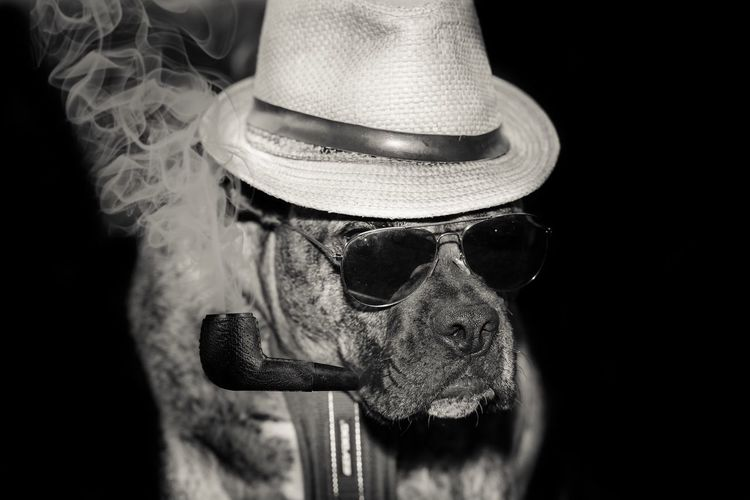 Dog Smoking Pipe Over Black Background