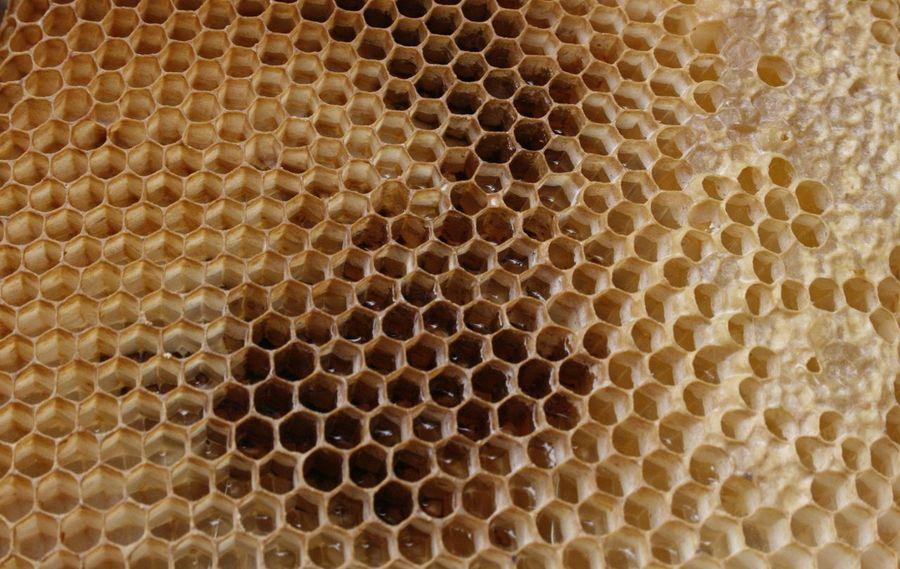 Honigbiene Beehive Bienenwabe Hexagon Honey Honeycomb Honig Honigwaben Pattern The Natural World