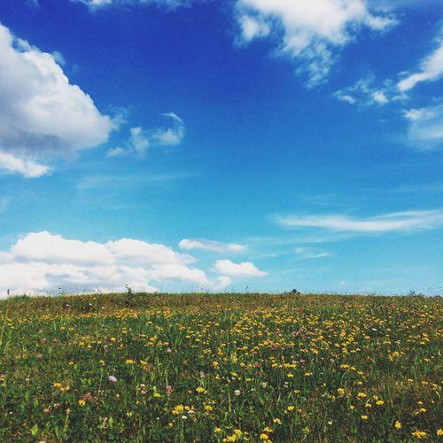 Flower Nature Hapiness Sun EyeEm Bestsellers