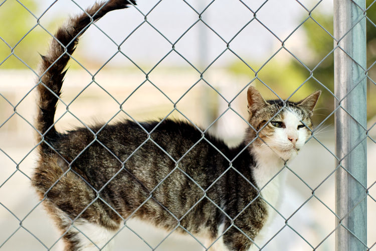 Close-up portrait of a cat behind fence