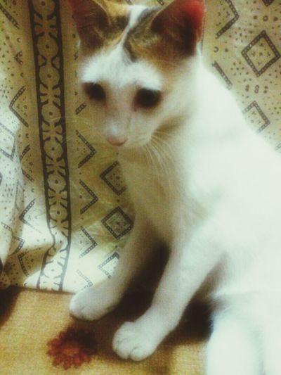 Cat Catobsessed Pets
