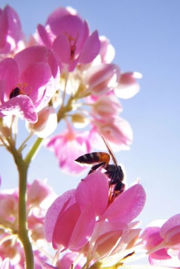 Close-up of bee on pink flowering plant