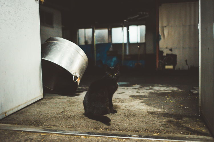 Abandoned Animal Animal Themes Architecture Built Structure Cat Day Domestic Domestic Animals Domestic Cat Feline Focus On Foreground Indoors  Livestock Mammal No People One Animal Pets Vertebrate
