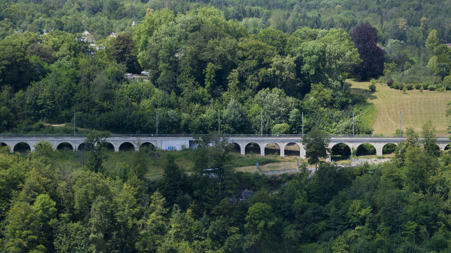 View of bridge and trees in forest