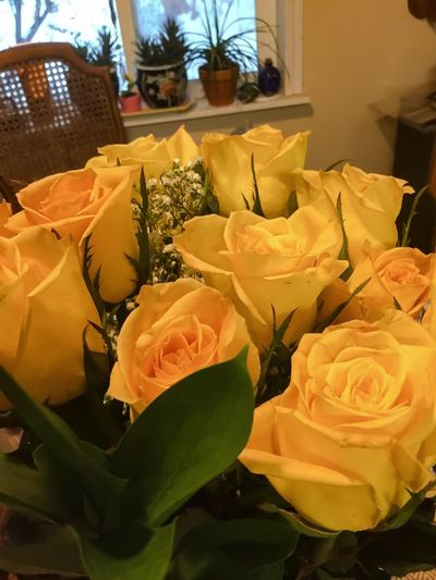 Yellow roses 8610383 Flowers,Plants & Garden Boquet Of Flowers Boquet Rose - Flower flowers Paint The Town Yellow