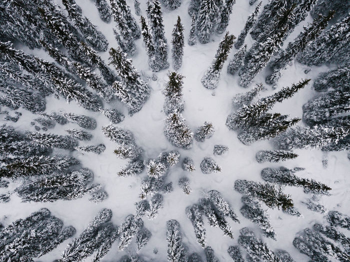 High angle view of snow covered trees in forest
