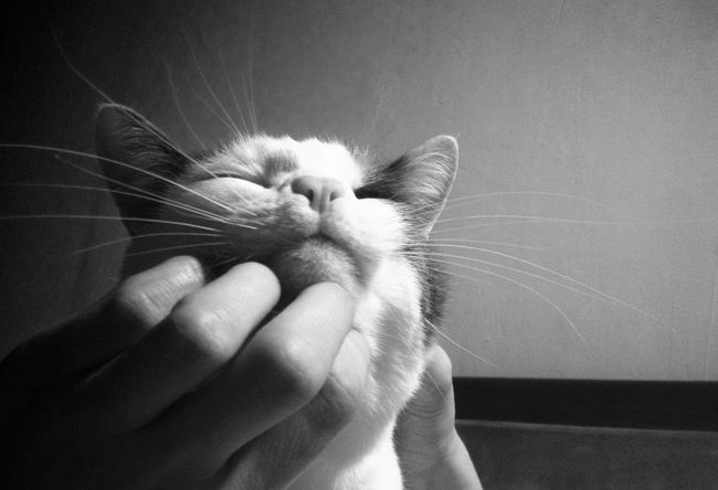 Stories from the City Enjoy Animal Happy Petstagram Pets Pussy Cat Blackandwhite Monochrome
