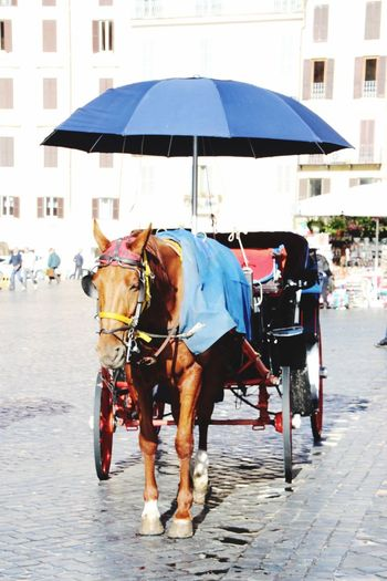 Rom Rome Horse Street Transportation Mode Of Transport Horse Cart Domestic Animals One Animal City Animal Themes Day Outdoors An Eye For Travel Moving Around Rome