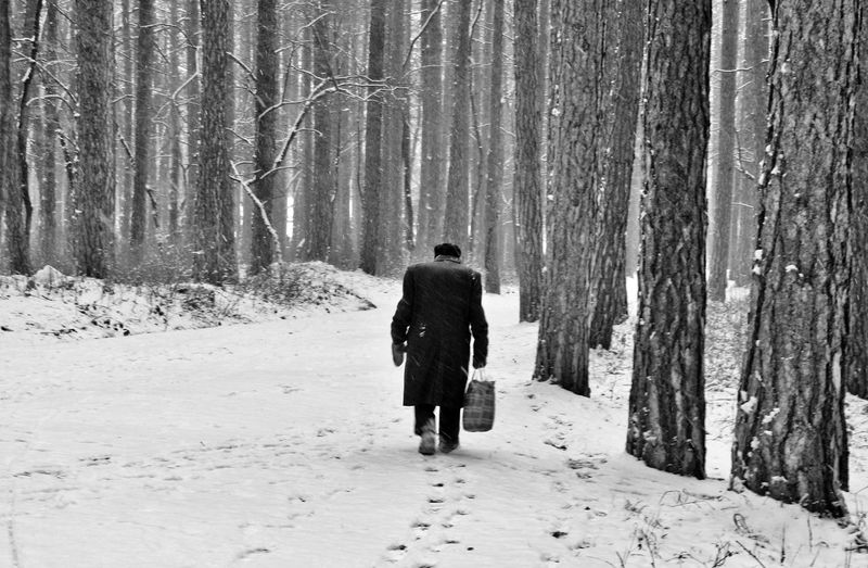 Full Length Rear View Of Man Walking With Bag On Snow Covered Forest
