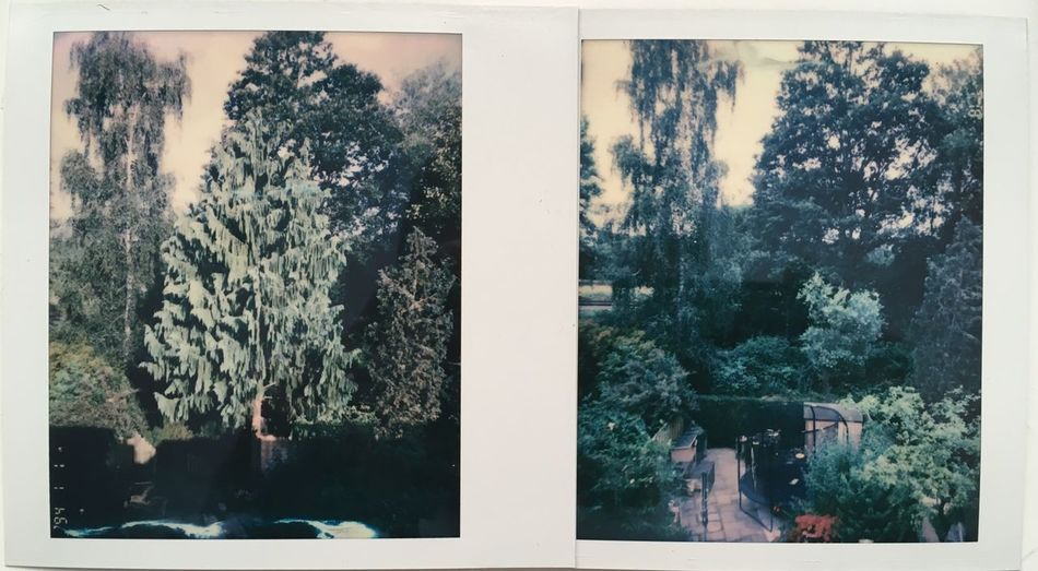 Two Day different view Polaroid Spectra Tree No People Day