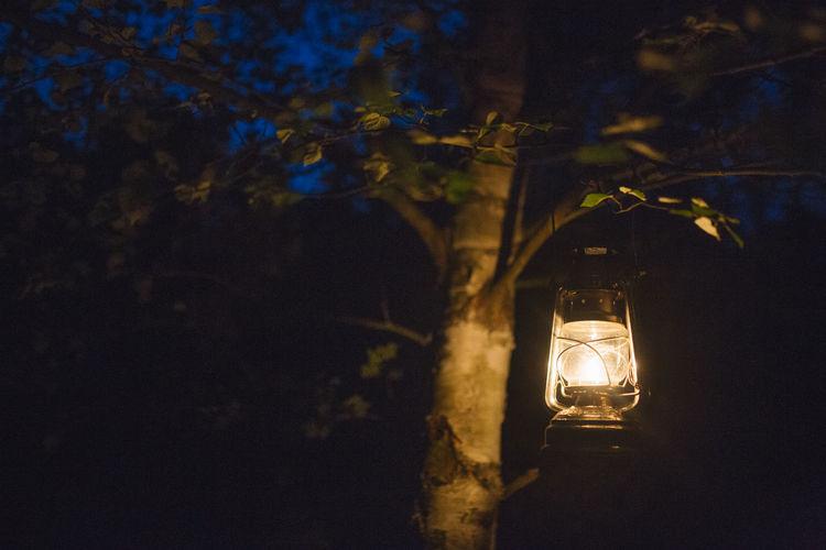 Camping Night