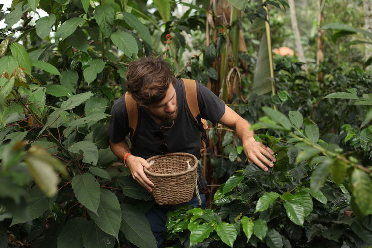 Man holding basket walking by plants