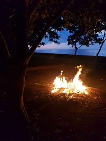 Bonfire and Sunset. Celebration EyeEm EyeEm Best Shots Eyeem Philippines EyeEm Nature Lover Sunset Gathering Group Tree Heat - Temperature Close-up Burning Bonfire Firewood Flame Campfire Lit