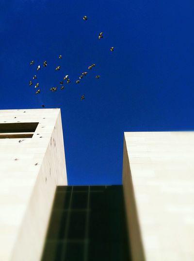 Architecture Birds In Flight Birds Flying Birds And A Beautiful City Blue Sky Washington, D. C. Washington DC The Capitol