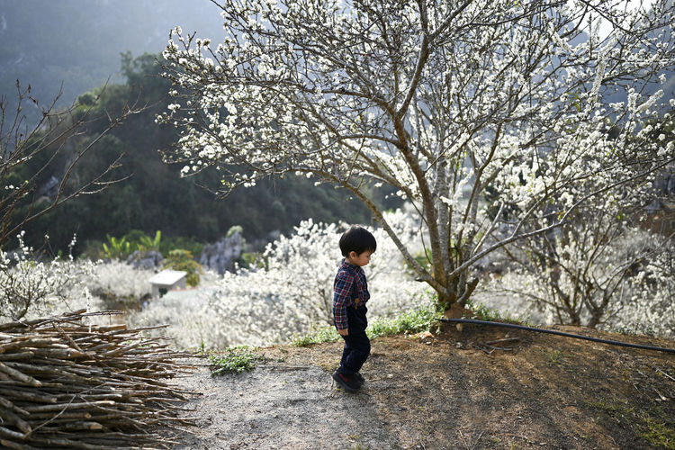 Side view of a boy standing by trees against plants. plum blossoms