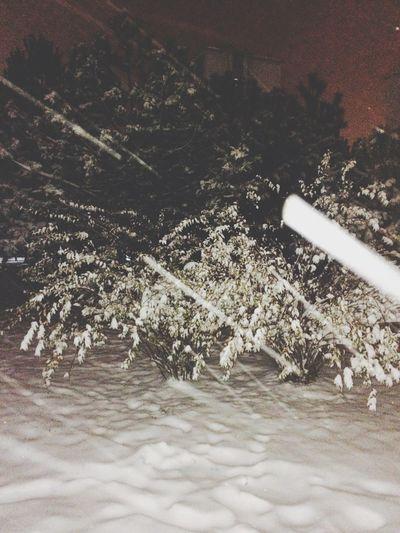 White Snow ❄