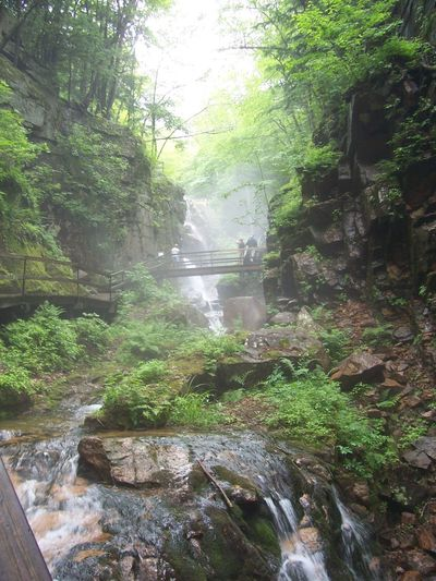 Flume Gorge (Mt Washington National Forest) Mist Franconia Notch Tree Plant Growth Water Green Color Nature Beauty In Nature Scenics - Nature Forest Waterfall