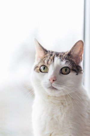 My cat rocky. Domestic Cat Looking At Camera Pets Portrait One Animal Domestic Animals Feline VSCO EyeEm Team Cats Tabbylove Cats 🐱 Cats Lovers