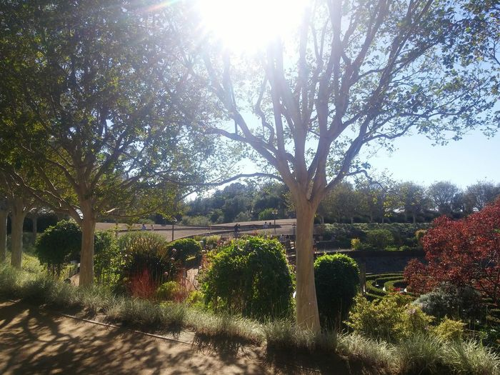 Discovering Great Works Southern California Greenery Tree Natural Beauty Outdoors Autumn Garden Walk On A Date Absorbing