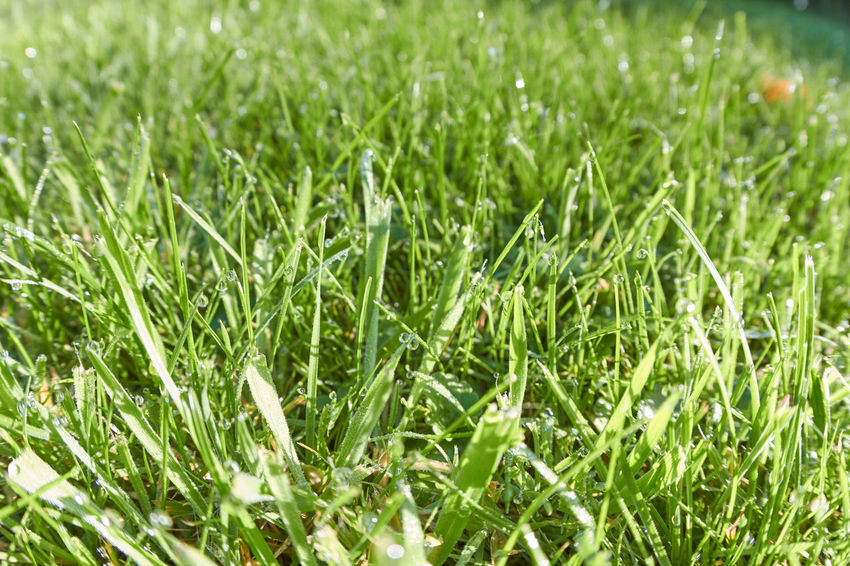 Grass Grass Backgrounds Beauty In Nature Blade Of Grass Day Dew Drop Field Food And Drink Freshness Full Frame Grass Green Color Growth Land Meadow Nature No People Outdoors Plant Selective Focus Vegetable Water Wet