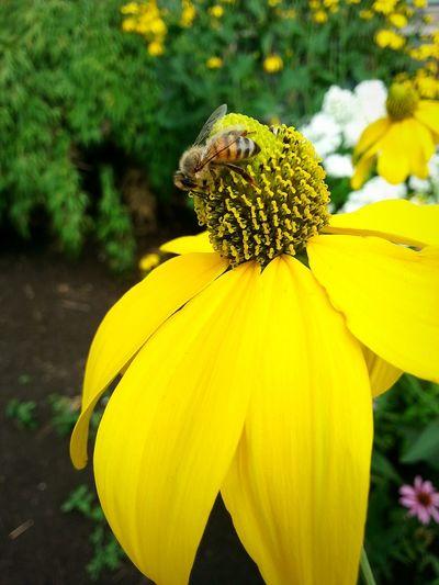 Beeandflower NYC Flowers Beautiful Nature Newyorkcity Enjoying The Sun