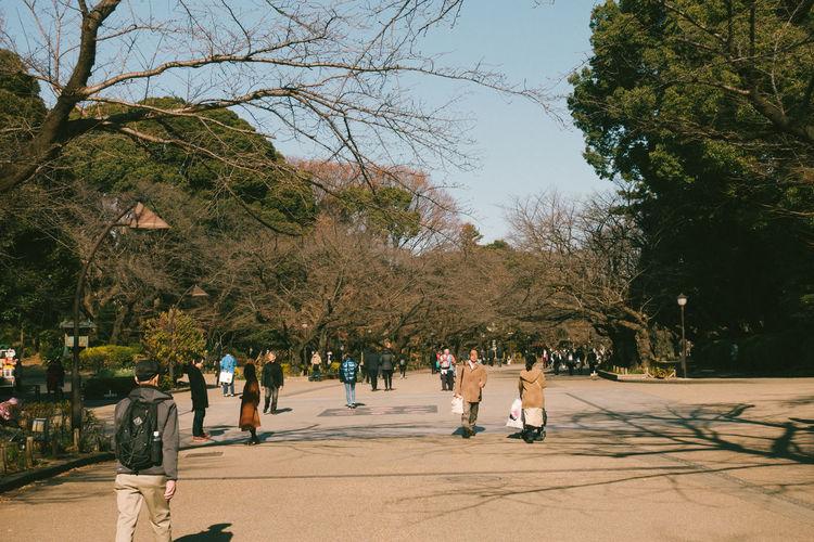Ueno Park, 2017