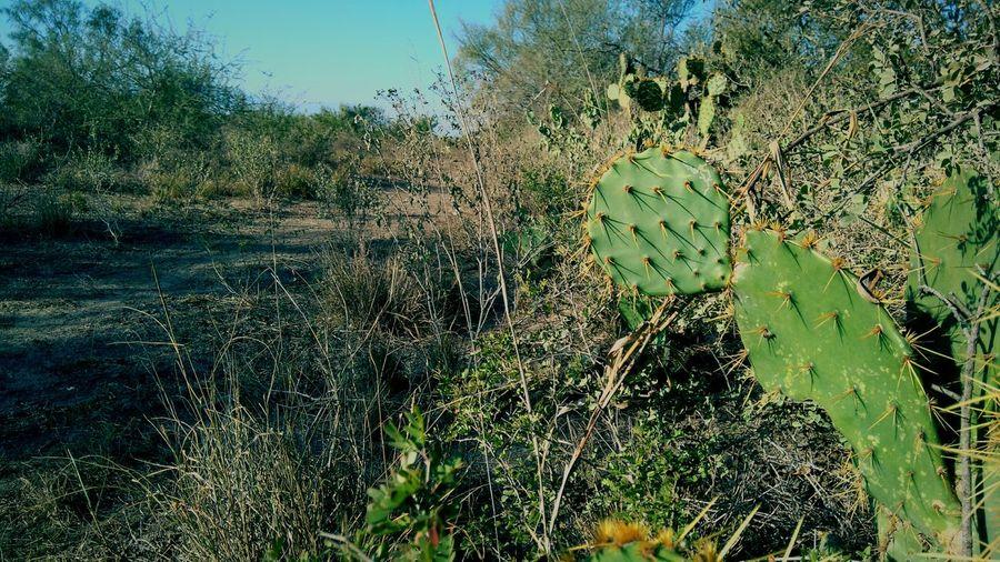 Vida en el desiero Live Mexico