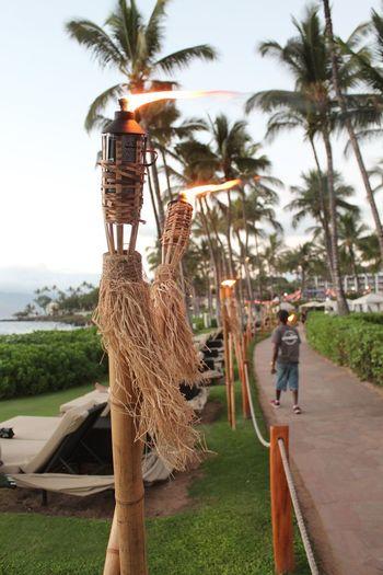 Hawaii Hawaii Maui Grand Wailea Ocean