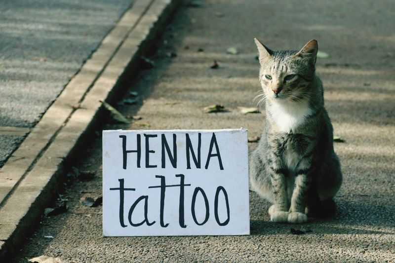 Cat sitting by henna tattoo text on road