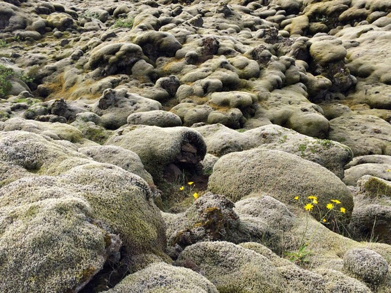 HIGH ANGLE VIEW OF ANIMAL ON ROCKS
