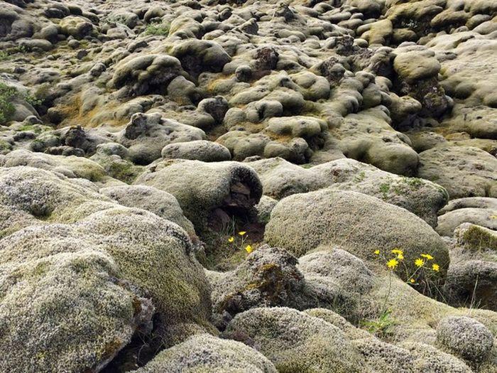 High angle view of sheep on rock