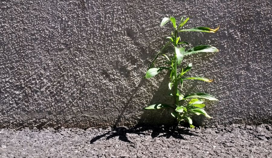 Street Photography Light And Shadow Urban Nature Concrete Growing Better