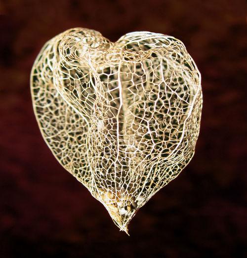 Close-up of heart shape winter cherry