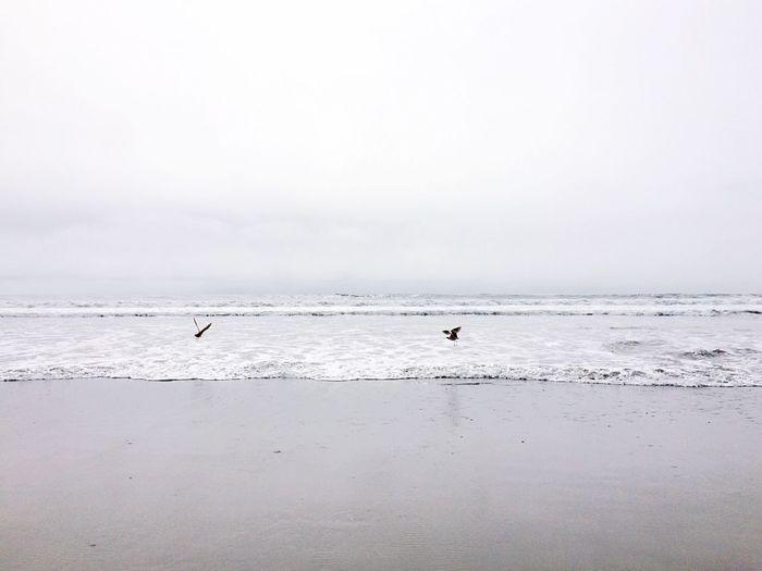 The Birds Beach