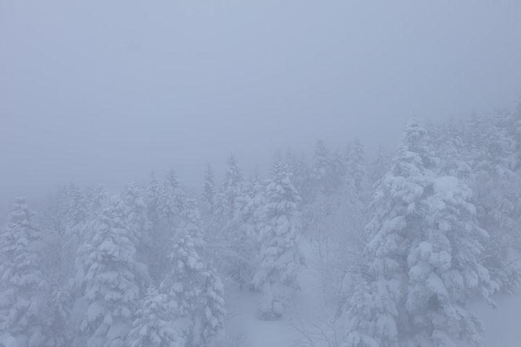 Snow Snowing