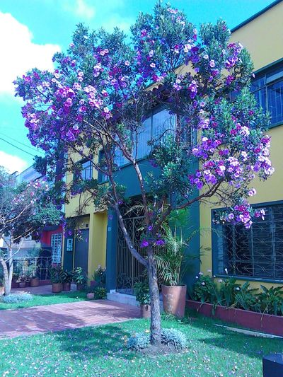 Bogotá primaveral